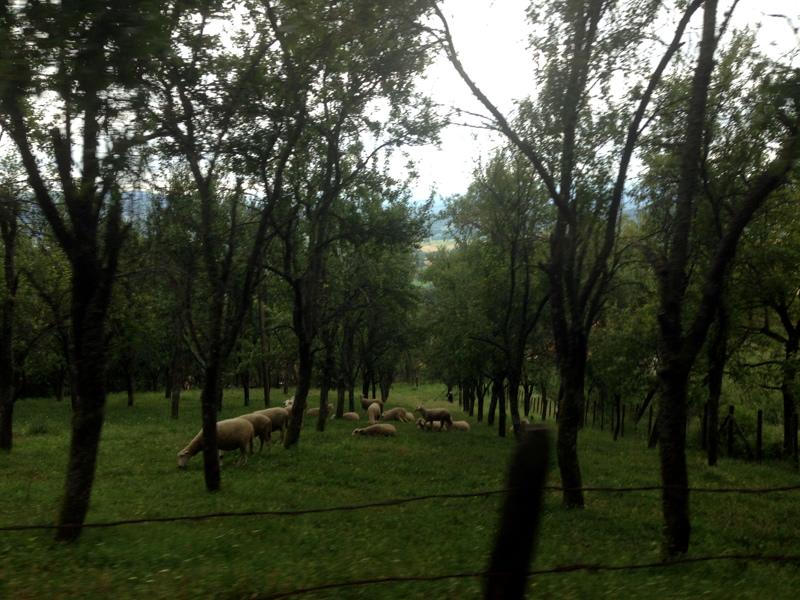 Овчаро-Кабларское ущелье. Сербия